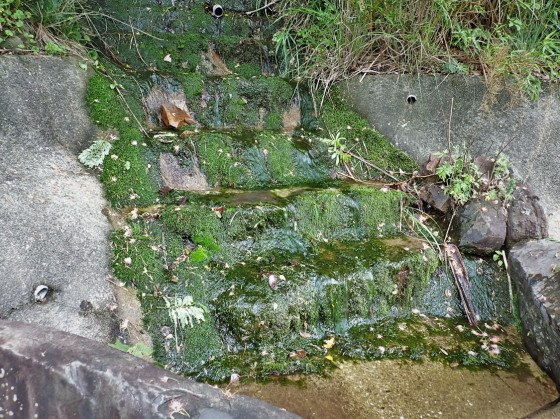 ウスリーマメゲンゴロウの生息環境