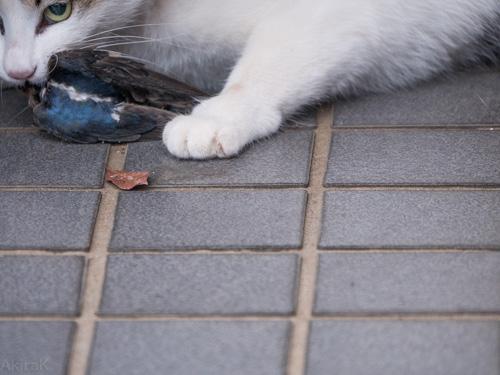 猫に食われたツバメ
