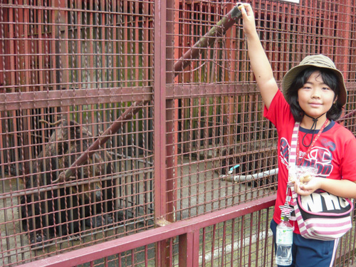 ヒグマの檻