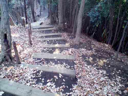 東高根森林公園04