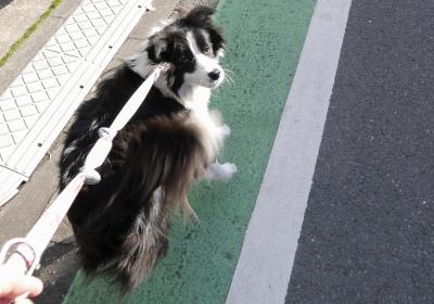 5kmペース走 ┐(ーoーi)┌