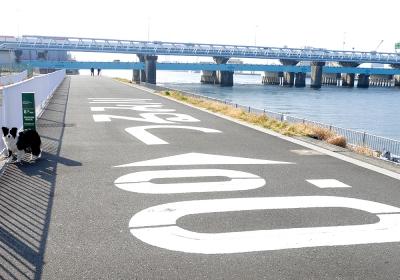 東京マラソン前のウォーク16km