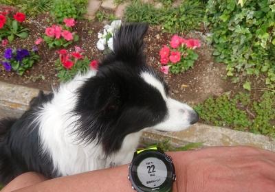 4か月半ぶりの10kmペース走