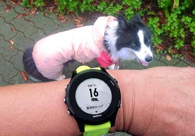 ゆっくりだけど、5km続けて走った
