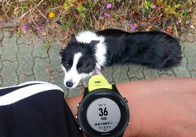 10kmを走っただけ