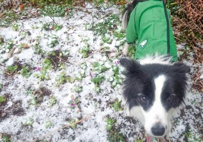 雪降る中でのペース走