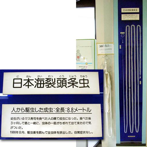 全長8.8メートルの日本海裂頭条虫