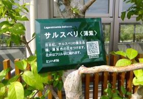 咲かないサルスベリの樹名札