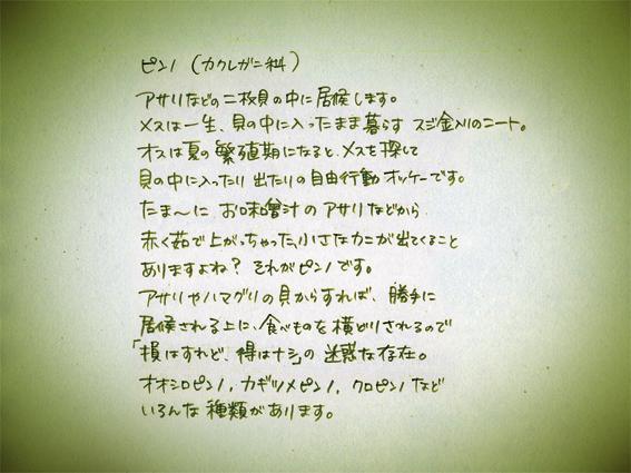 004ピンノ解説文.jpg