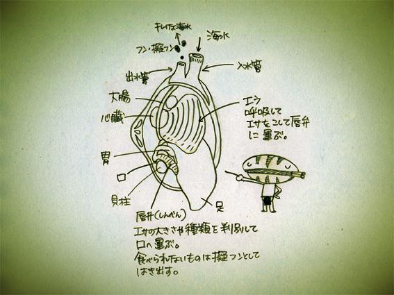 008アサリ解説その2.jpg