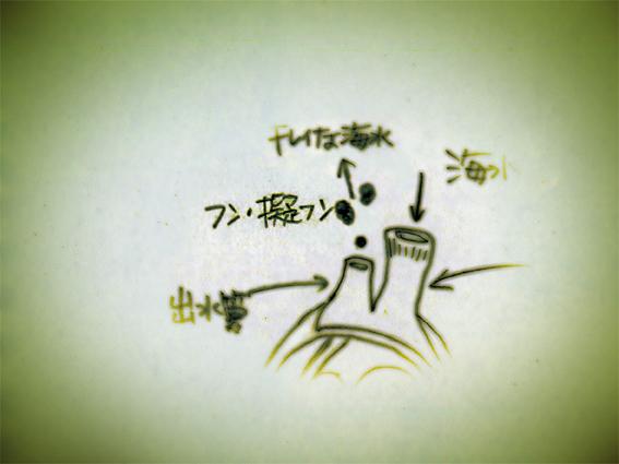 008アサリ解説その3.jpg