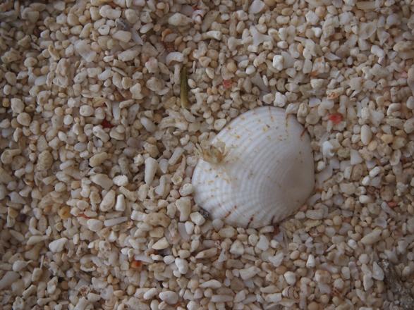 P8125092貝の上.jpg