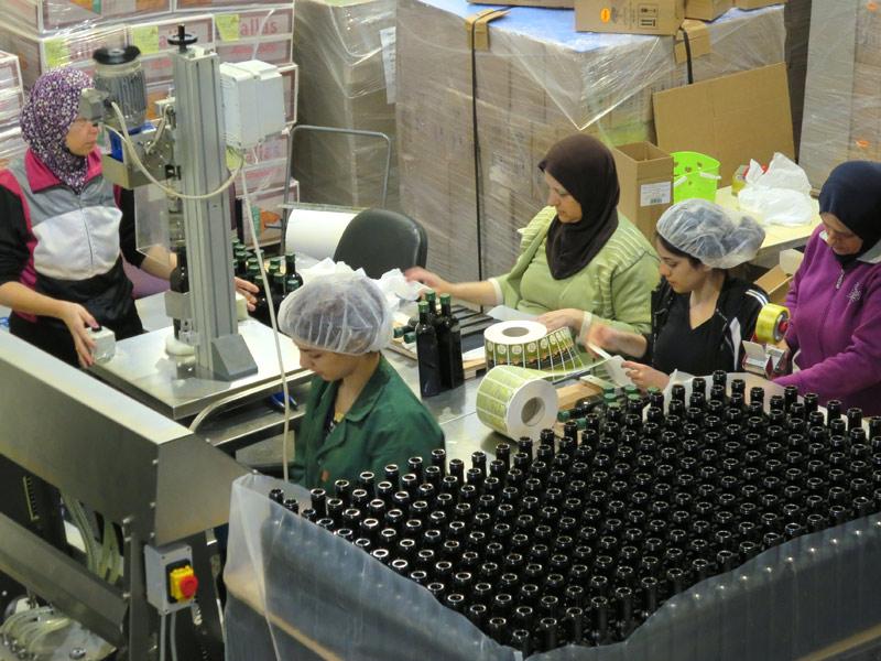 オリーブオイル工場