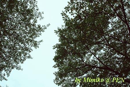 空と緑と風と。。。