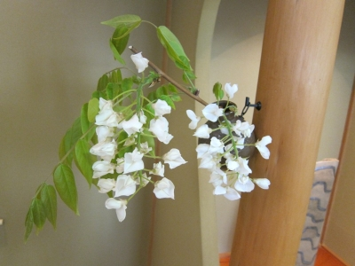 穴窯の花挿し