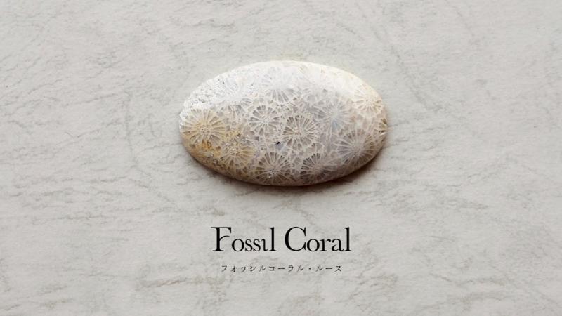 天然石/フォッシルコーラル