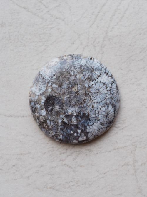 天然石/ルース/フォッシルコーラル/