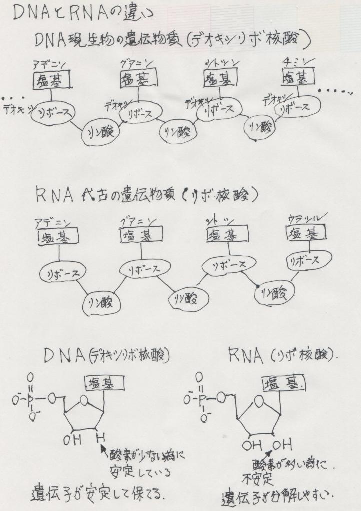 DNAとRNAの違い