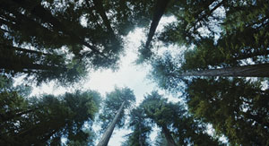 ツリー・オブ・ライフ(The Tree of Life)