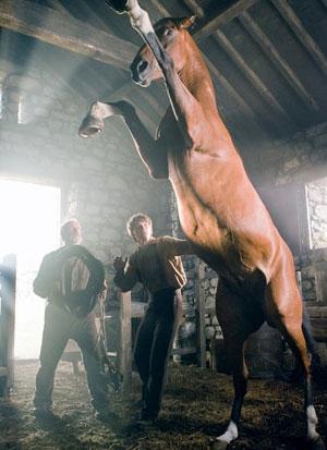 戦火の馬/War Horse