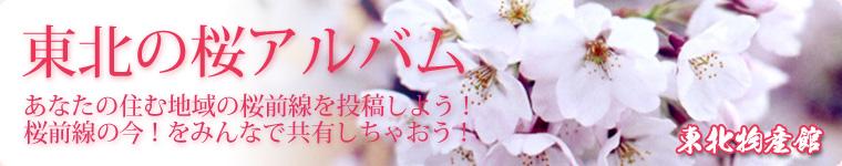東北の桜アルバム