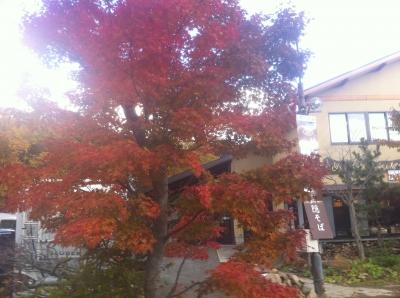 紅葉が奇麗でした