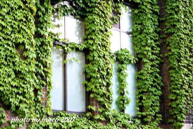 北海道大学医学部の窓