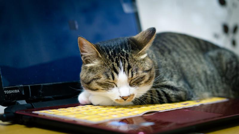パソコンの上で寝るネコ