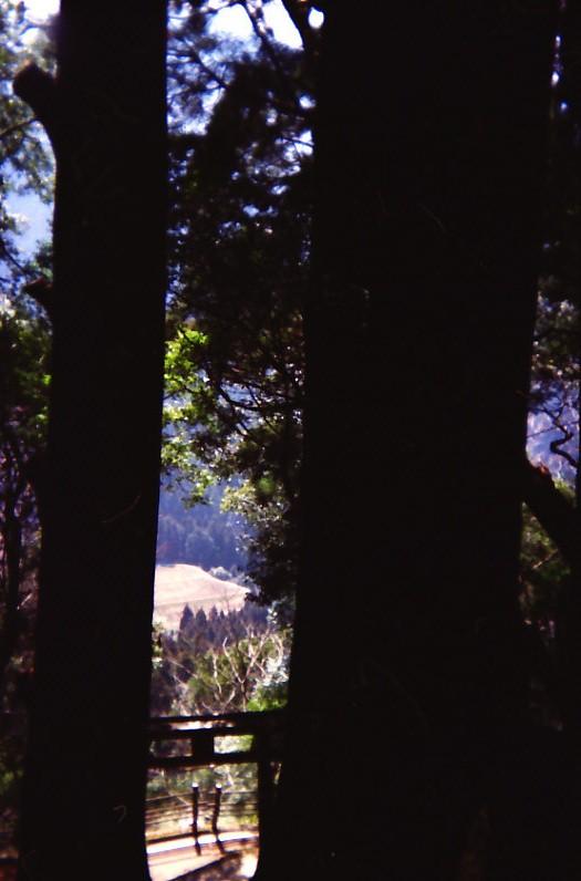 継桜王子 野中の一方杉