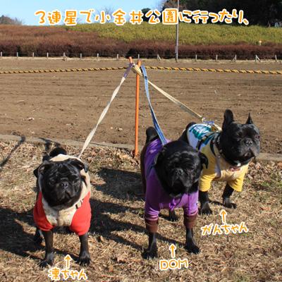 3連星で小金井公園に行ったり、