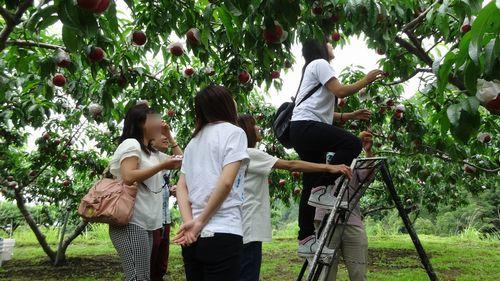 桃狩り静岡から近い食べ放題時間制限なし人気桃直売所へおすすめ一宮御坂インター降りてすぐ