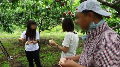 桃狩り静岡から近い人気桃直売所一宮御坂インター降りてすぐ食べ放題時間制限なしおすすめ