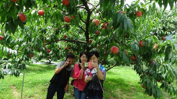 山梨御坂オ桃狩り食べ放題は幸せSNS投稿タイムラインが映えるおすすめ観光農園桃直売所