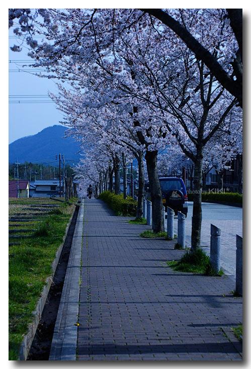 いながわ桜1