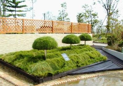 屋上緑化かるいちばんの曲面緑化 日本最高賞受賞
