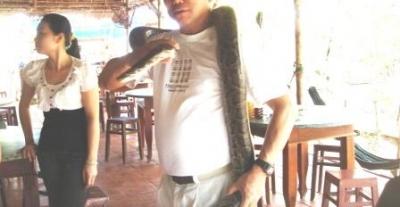 にしきヘビ