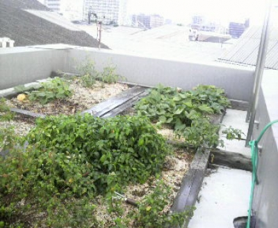 兼定興産の屋上緑化かるいちばん菜園