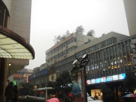 市内の屋上緑化