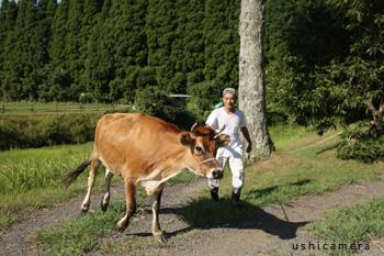 千葉県 五十川牧場 牛写真