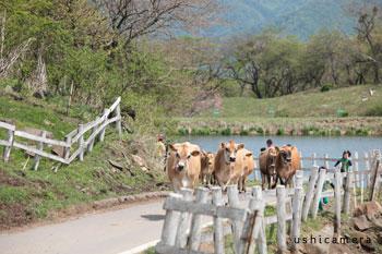 群馬県のおすすめ牧場 神津牧場 牛写真家の牧場訪問記