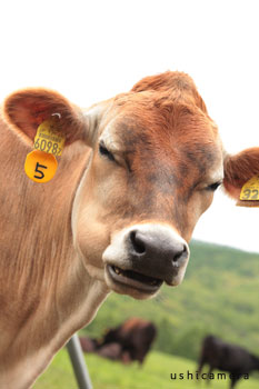 長野県のおすすめ牧場 蓼科牧場 牛写真家の牧場訪問記