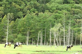 栃木県 光徳牧場 牛写真家の牧場訪問記