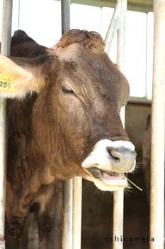 栃木県 大笹牧場 牛写真家の牧場訪問記
