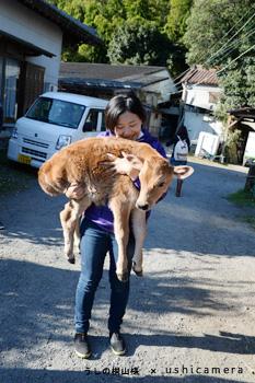 東京都八王子市 磯沼牧場 牛写真教室