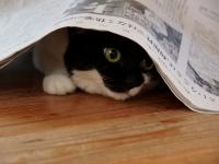 のこ新聞の家