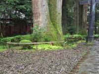 カップル杉