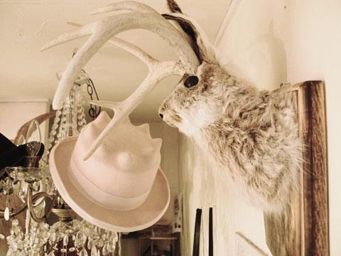 ウサギ 剥製 販売