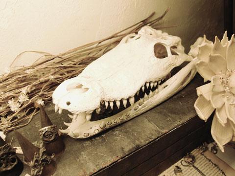 クロコダイル 頭骨