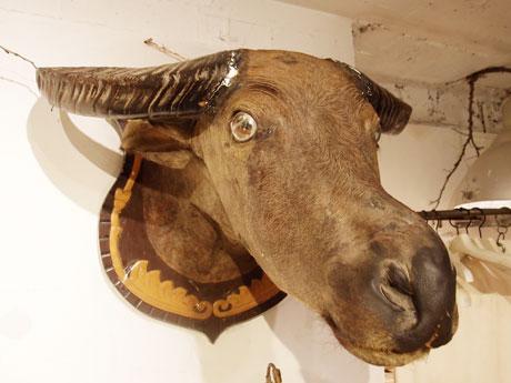 水牛のトロフィー