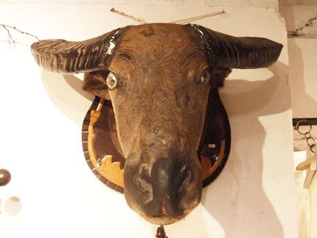 水牛の剥製